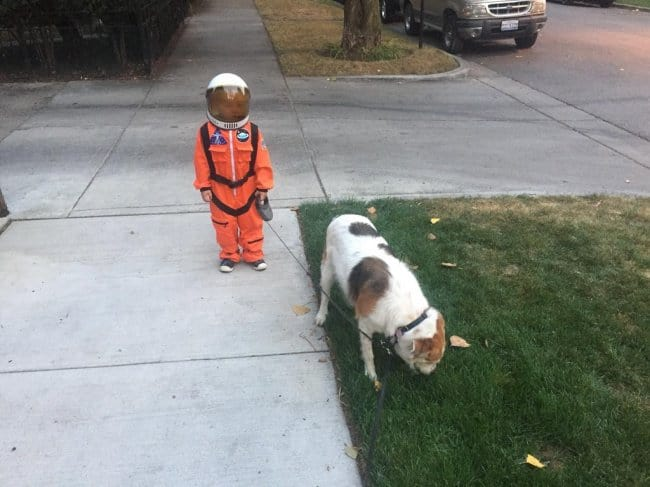 astronauts-walking-their-dogs
