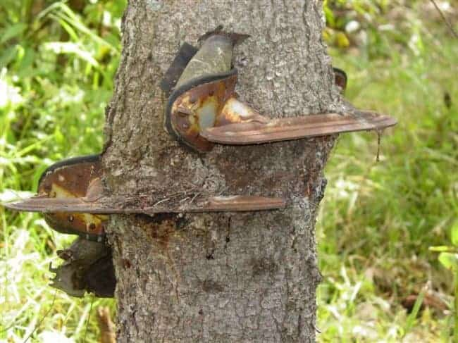 skates-growing-on-trees