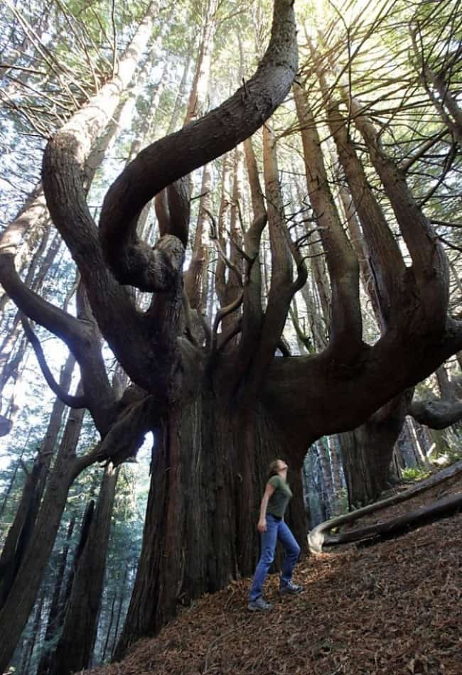 incredible-tree-in-forest
