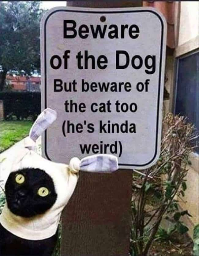 beware_of_the_cat_too_sign