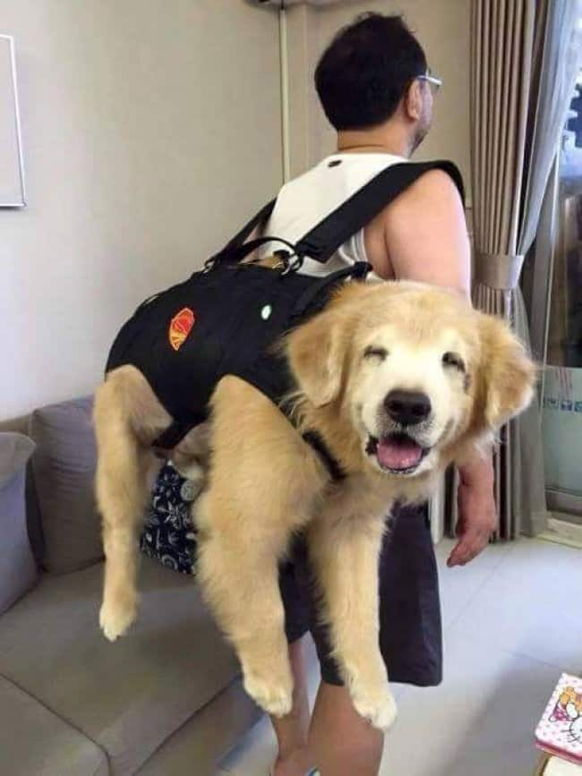 big-dog-carried-in-a-backpack
