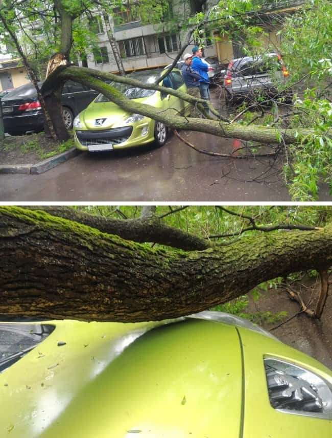 car-an-inch-away-from-falling-tree
