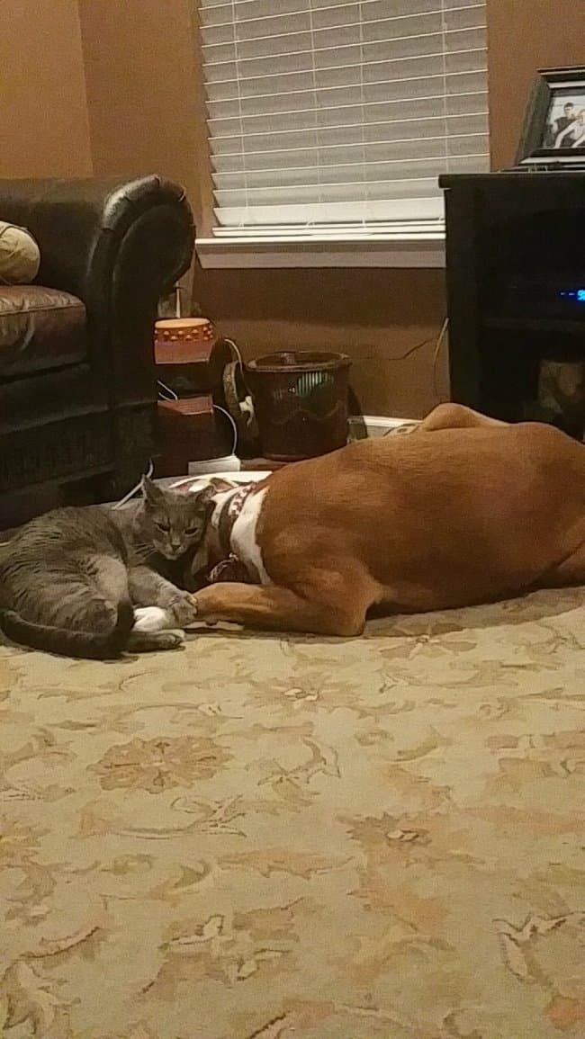 cat-consoling-dog