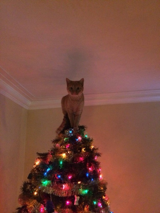 cat-on-top-of-christmas-tree