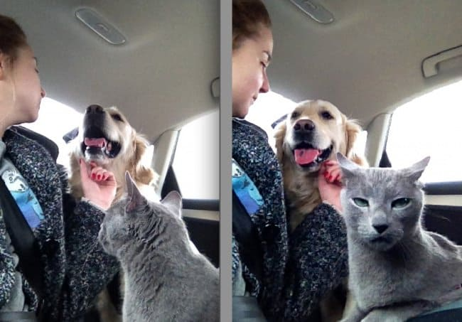 cat_caught_being_jealous_of_the_dog