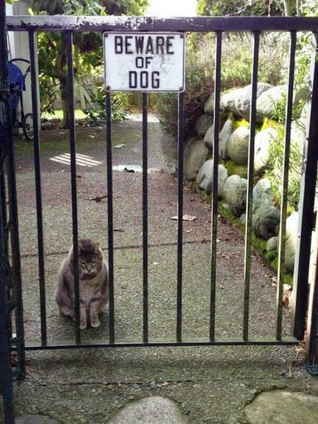 cat_guard_beware_of_dog