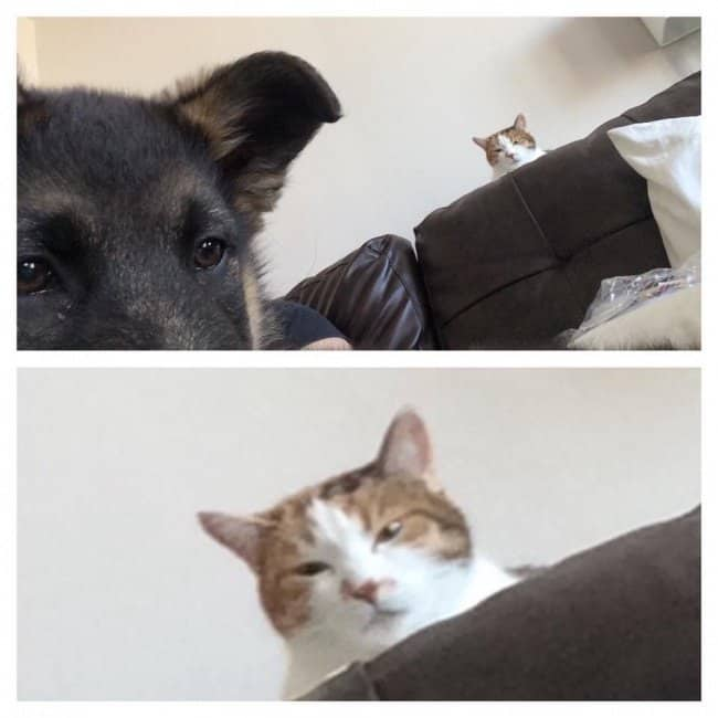 cat_secretly_peeks_at_the_new_dog