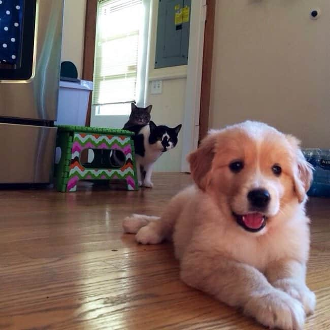 cats_confused_at_the_new_puppy