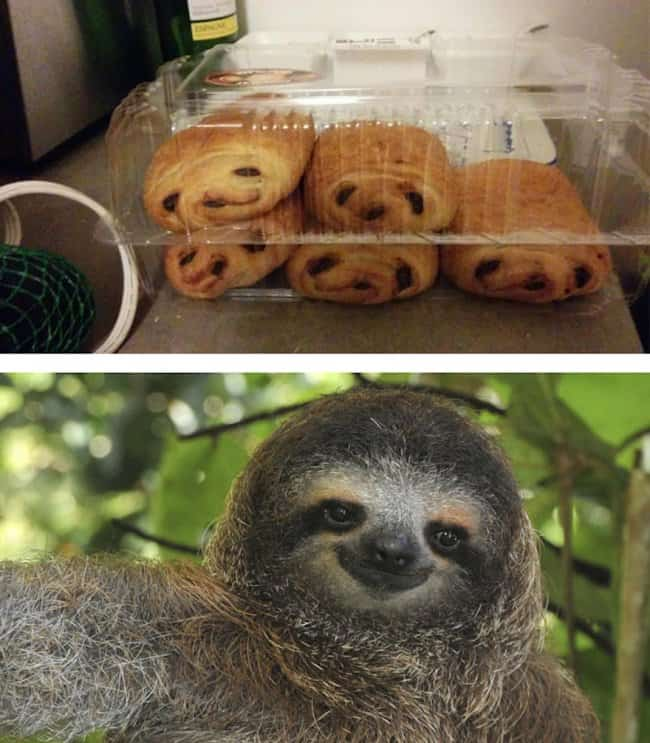 croissants_and_sloth_look_alike