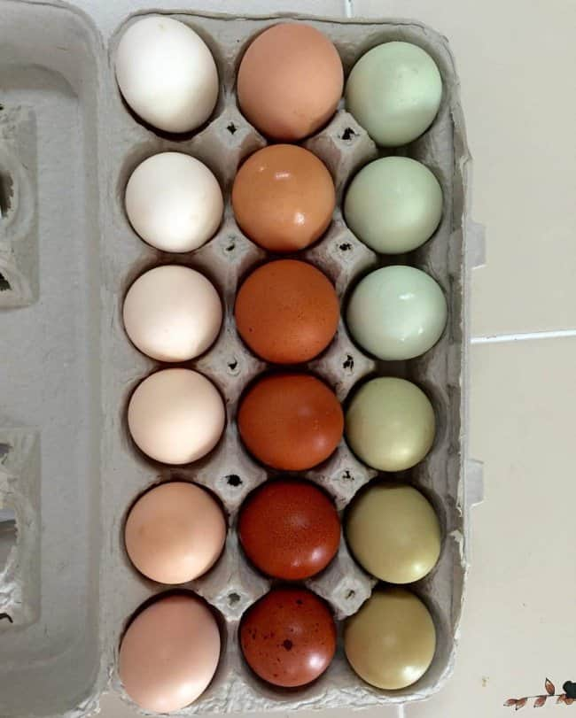 different_shades_of_egg_perfect_photos