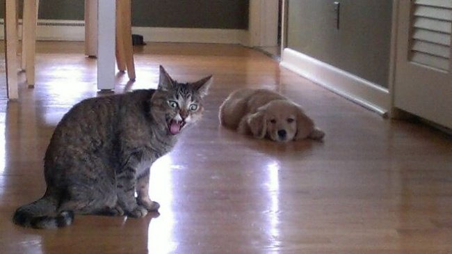 distressed_cat_and_chilling_dog