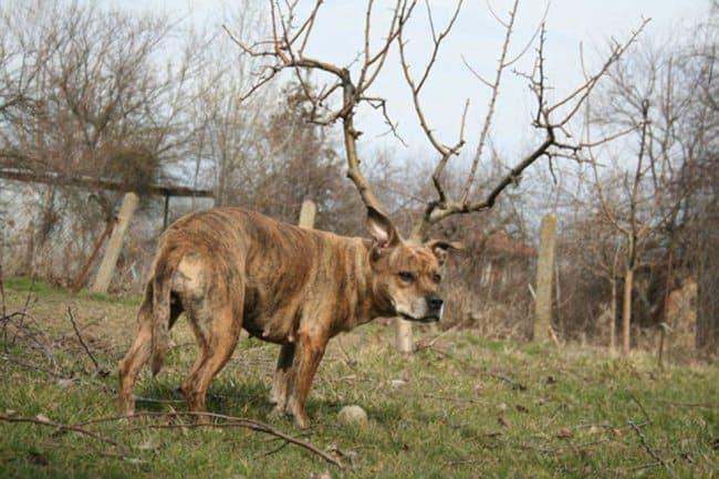 dog-deer-tricky-pictures