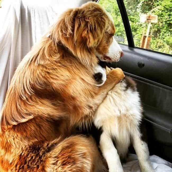 dog-embracing-another-dog