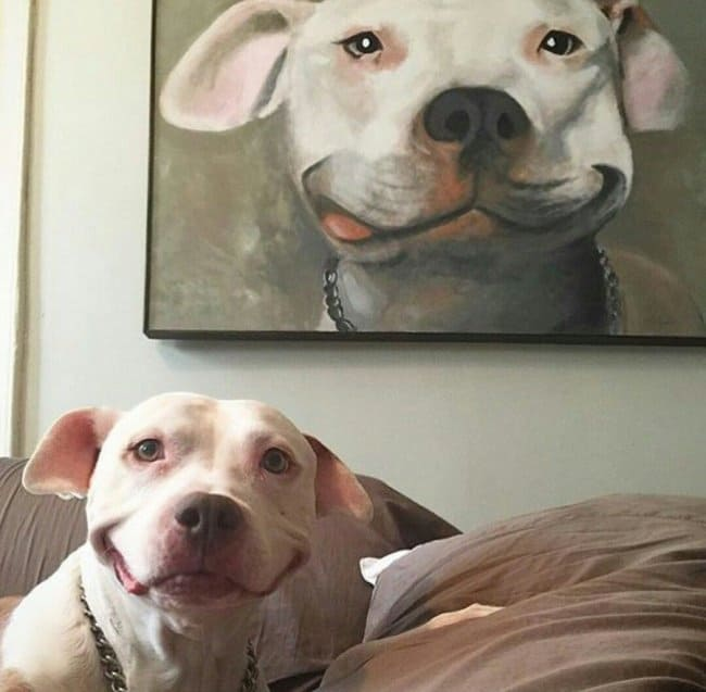dog-is-happy-with-self-portrait-meaningful-pictures