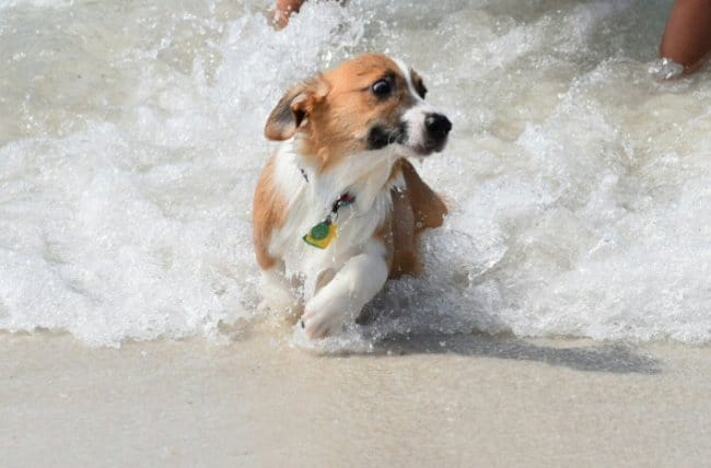 dog-scared-of-the-waves