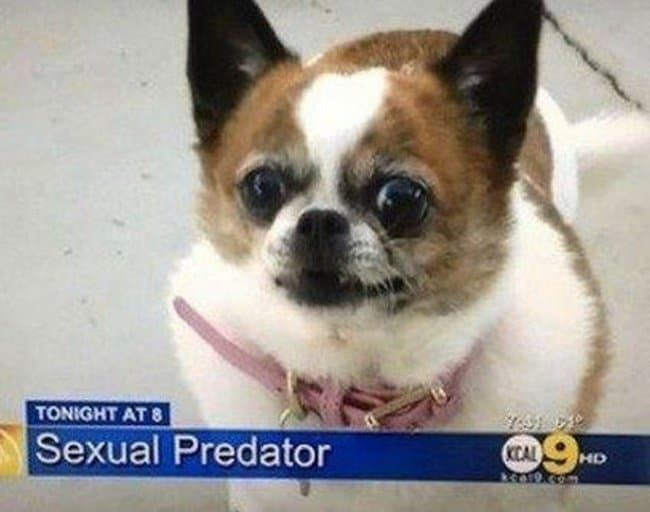dog-sexual-predator-funniest-news-captions