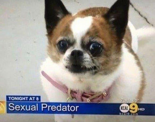 dog-sexual-predator-funniest-news-captions