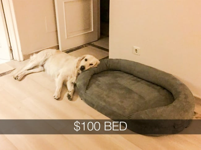 dog_dislikes_expensive_bed