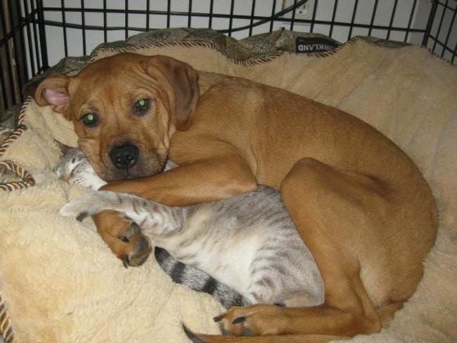 dog_hugs_sleeping_cat