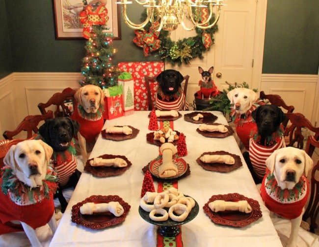 dogs-christmas-feast-meaningful-pictures