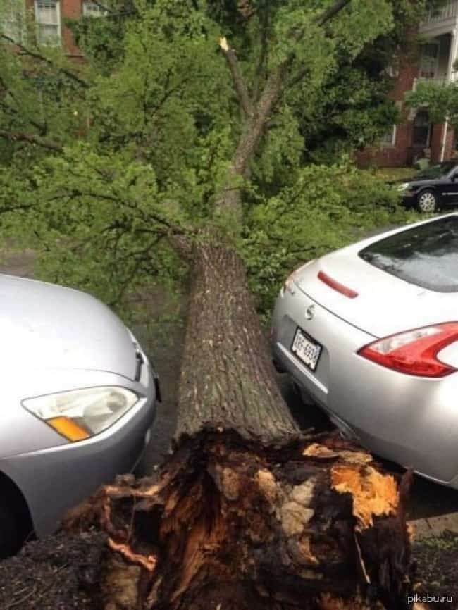 fallen-tree-between-two-parked-cars