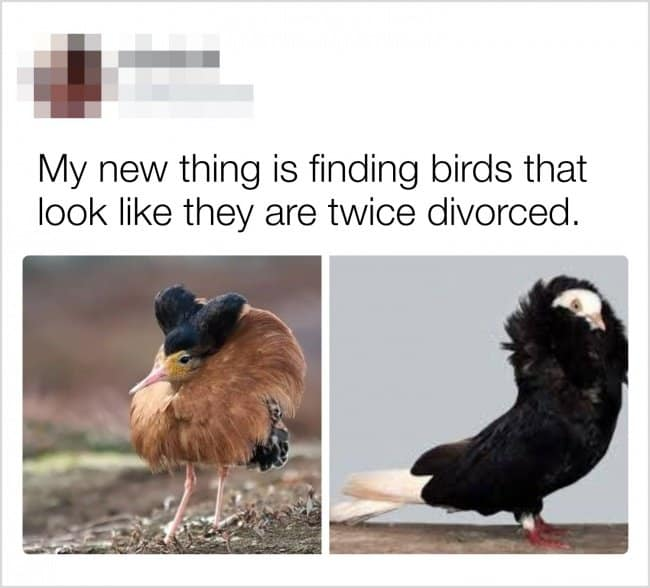 finding-birds-that-look-twice-divorced-creativity-in-hilarious-ways