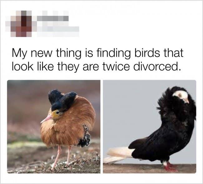 finding-birds-that-look-twice-divorced-creativity-in-hilarious-ways