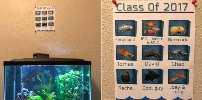 fish-yearbook-creativity-in-hilarious-ways