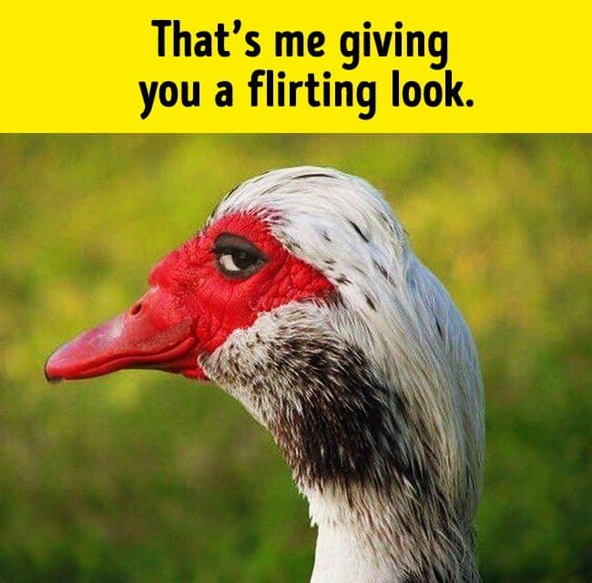 giving_a_flirty_look_funny_animal_photos