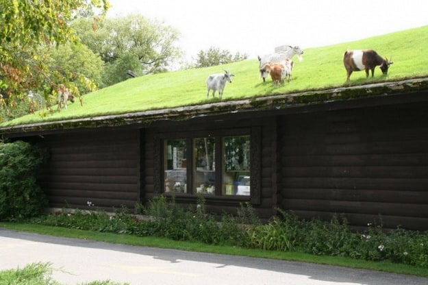 goats-on-the-roof-of-a-restaurant