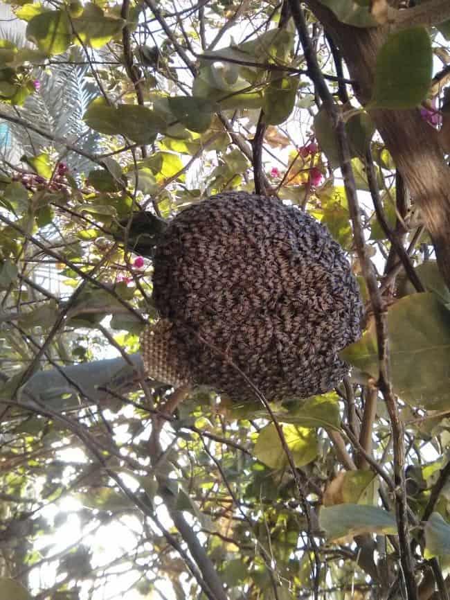 huge_beehive