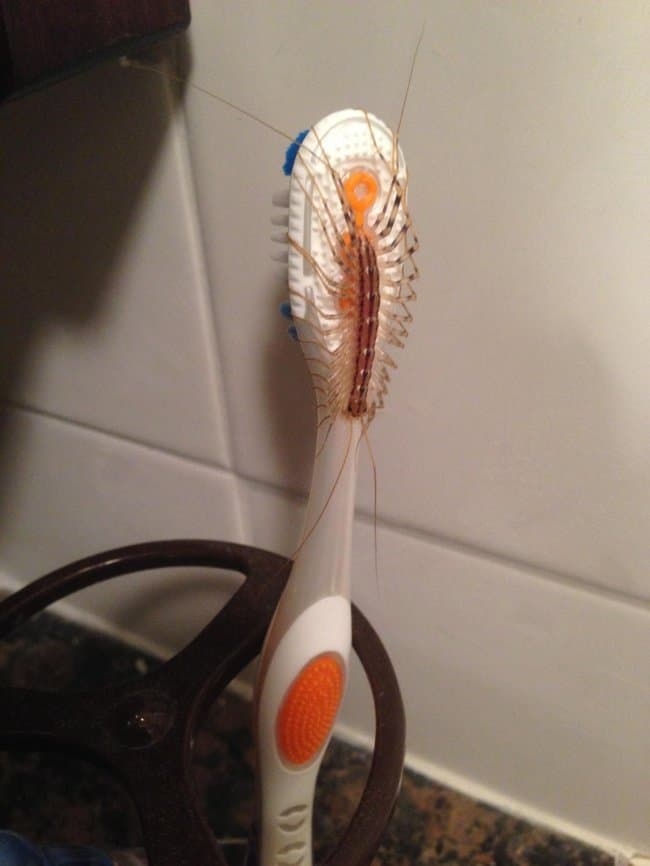 icky_bug_on_toothbrush