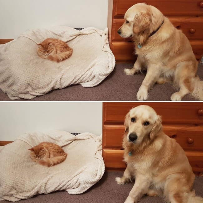 kitten_invades_dog_bed