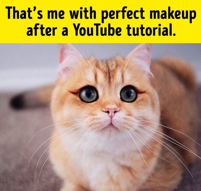 makeup_youtube_tutorial_funny_animal_photos