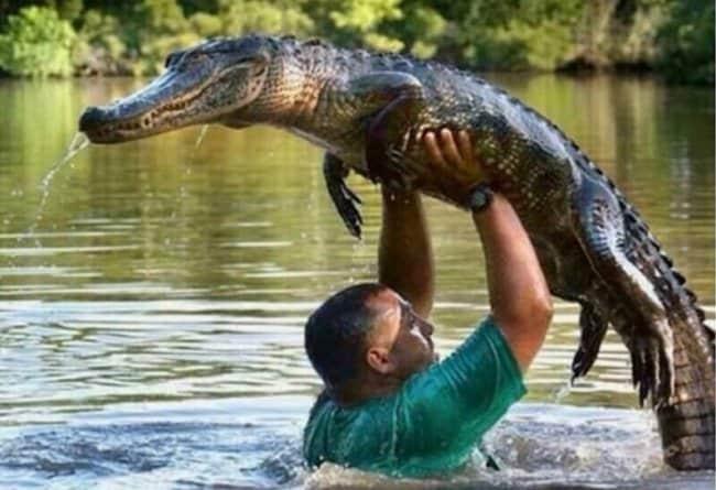 man-and-alligator