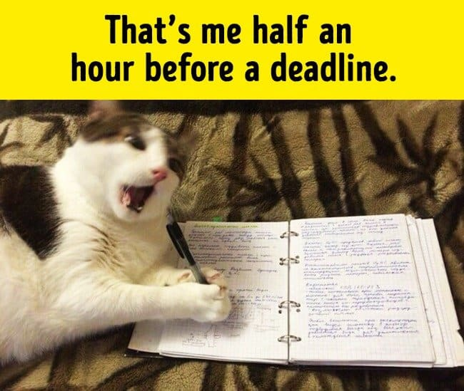 meeting_a_deadline_funny_animal_photos