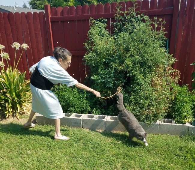 mom_trying_to_scare_away_cat_from_plant