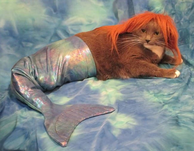 mom_turned_cat_into_mermaid