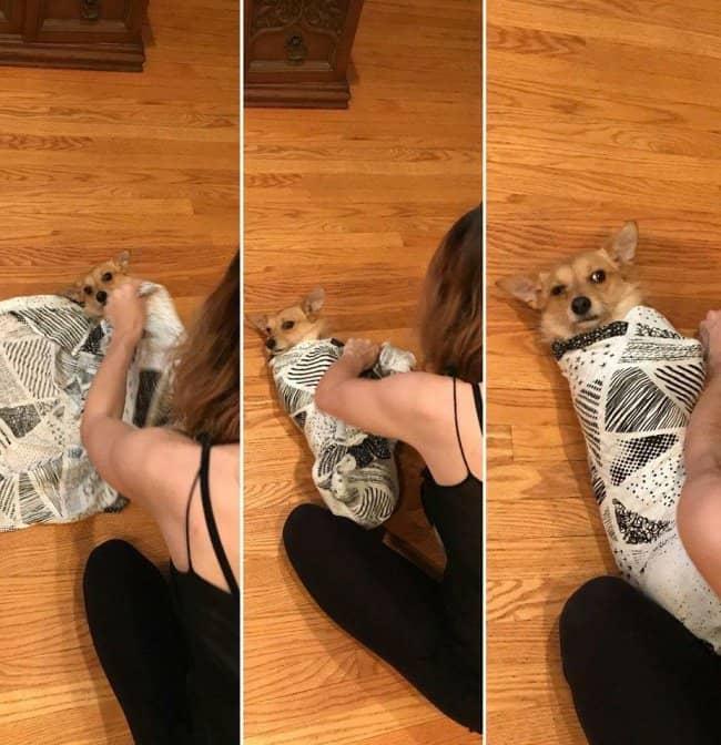 pets-go-through-struggles-of-pregnancy-too