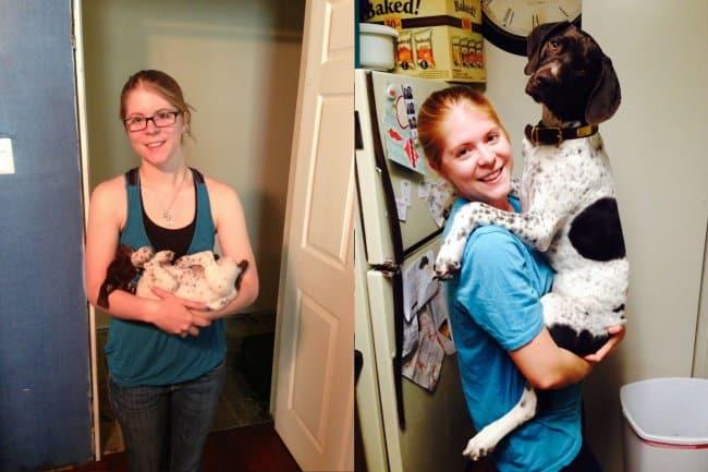 puppy-versus-big-dog