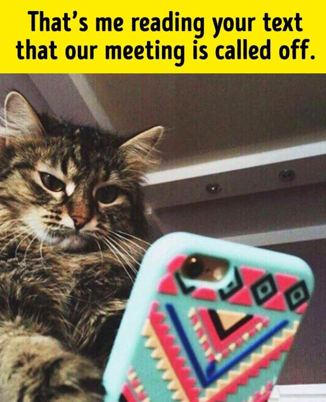 reading_annoying_text_funny_animal_photos