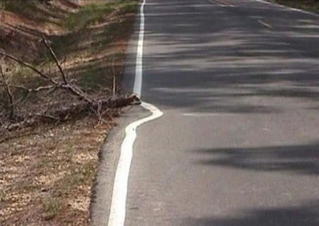 road_paint_avoids_a_tree
