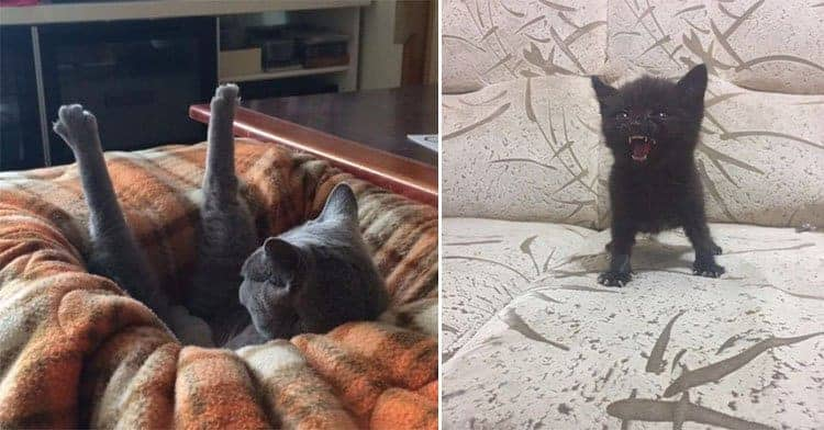 Hilarious Photos Of Silly Cats And Their Funny Ways