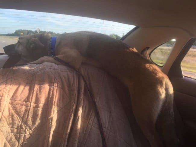 sleeping-dog-inside-the-car