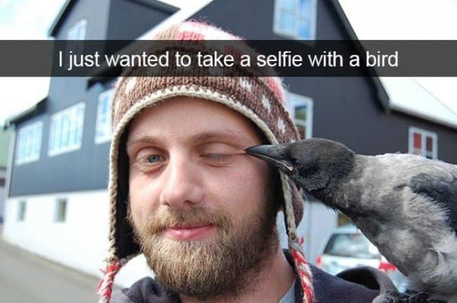 selfie-with-a-bird-not-a-good-idea-when-simple-things-go-wrong