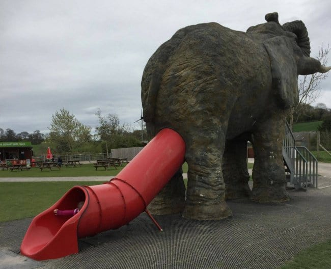 slide-down-the-elephant-anus-funniest-design-fails