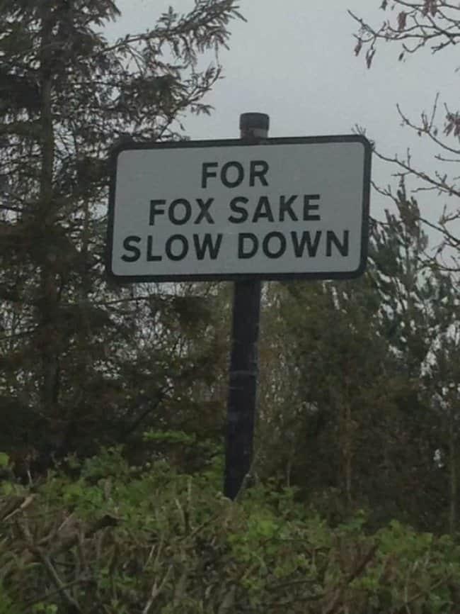 slow_down_for_fox_sake