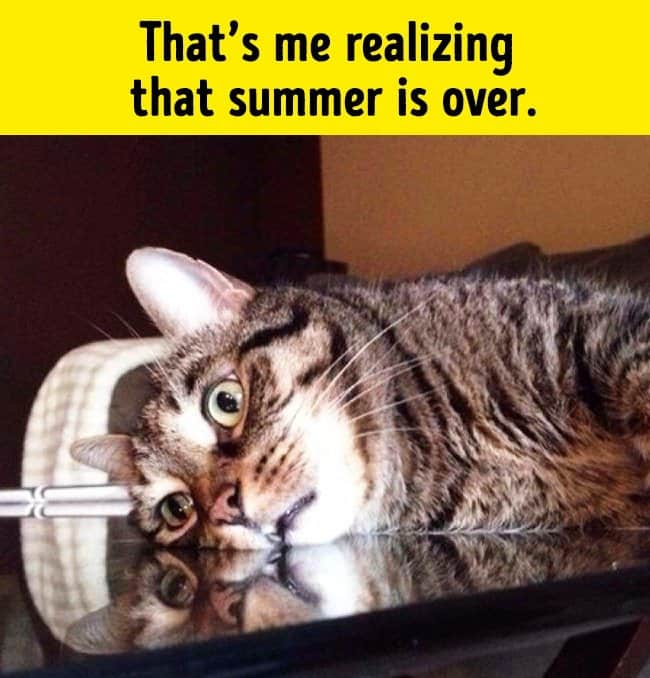 summer_is_over_funny_animal_photos