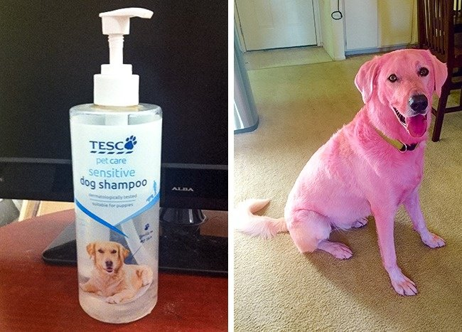 tesco-dog-shampoo-turns-dog-color-pink