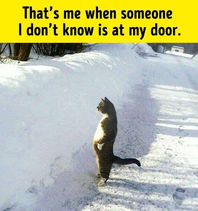there_is_a_stranger_at_the_door_funny_animal_photos